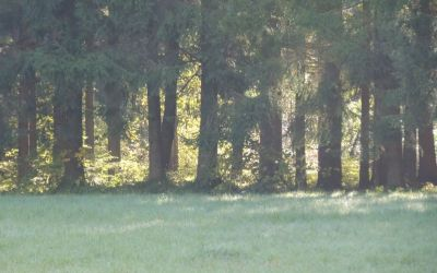 DSCN5801.jpg